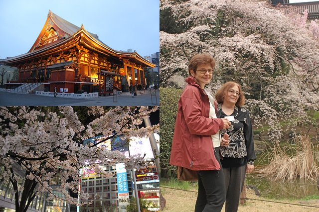 news-2015-apr-bioinf-sakura